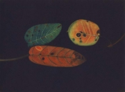 James McCreary, Autumn leaves III, mezzotint & aquatint, 2007, €380 framed