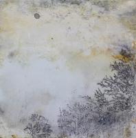 cloud_forest